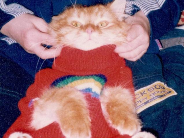 Pulloverkater (1)